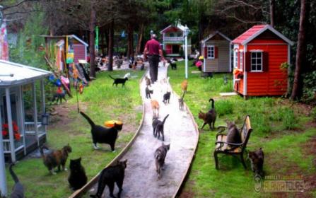 Парк кошек в Алании