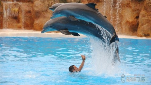 Where are dolphins in Alanya