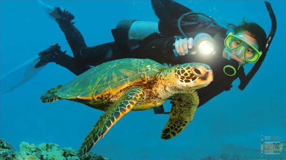 Подводный тур в Алании и дайвинг