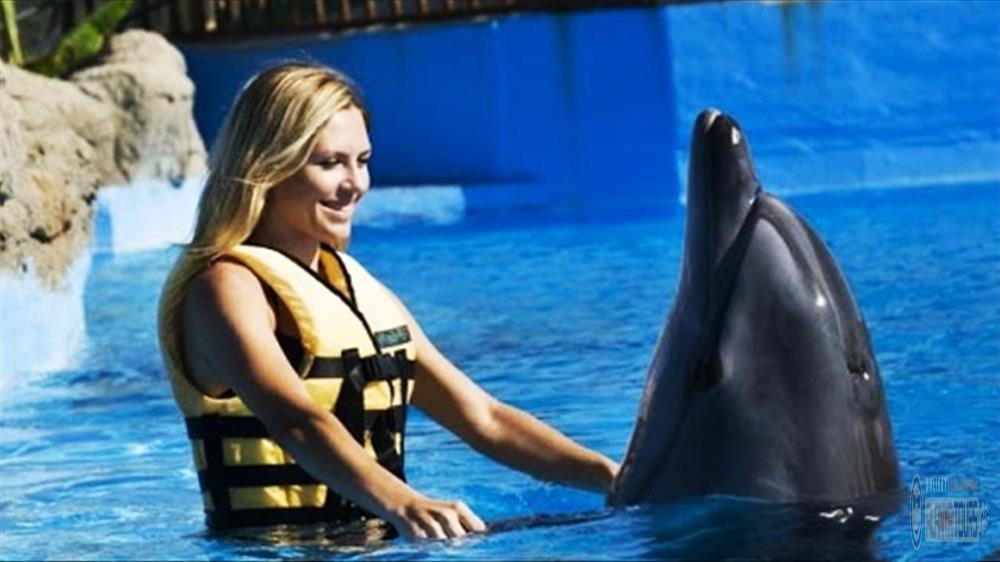 Sealanya dolphin park price 2020
