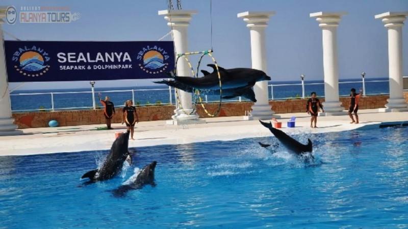 Dolphin Park in Alanya